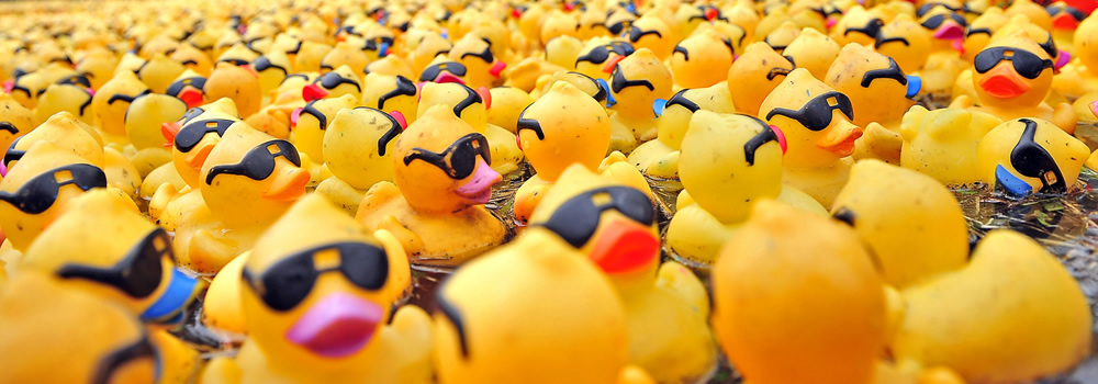 entenrennen-derby-duckrace-2